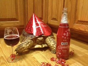 happy-new-year-tortoise