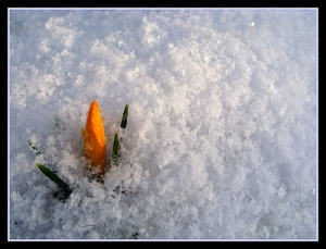signs of spring pic