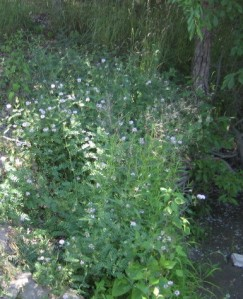 Horseshoe-banks of flowers,detail