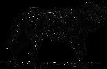 wolf-153807_1280