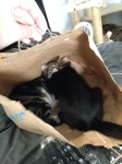 cats in bag