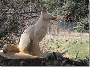 fox caton norwich