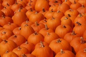 pumpkins-wall-to-wall