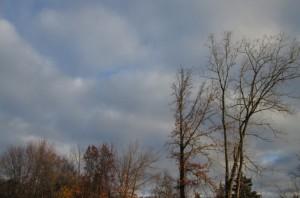 trees-behind-john-knox-small