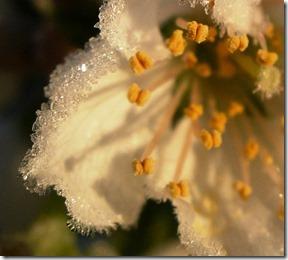 glistening frost